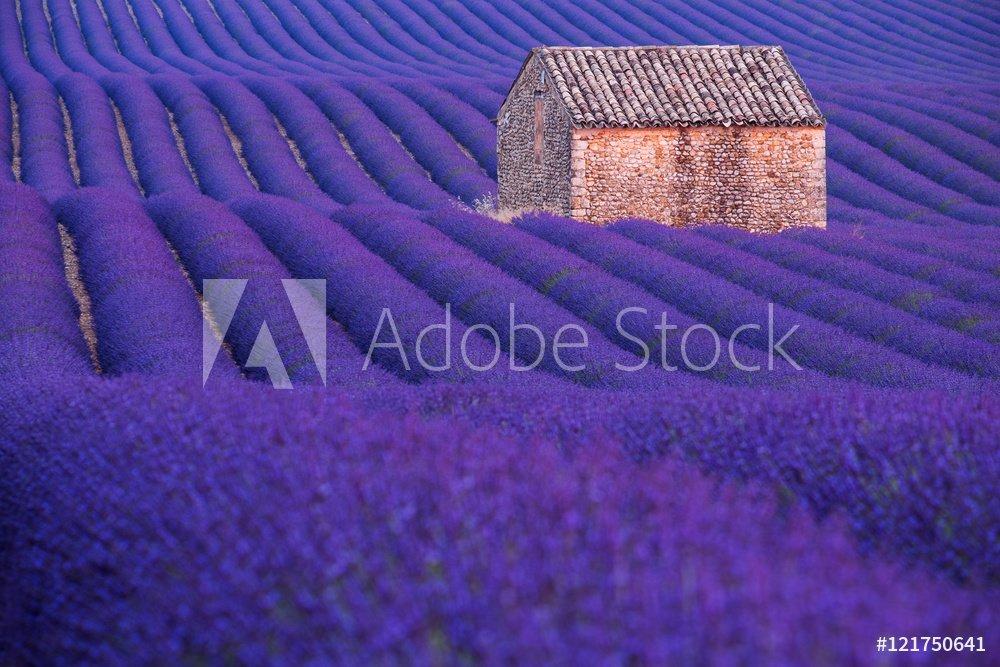AdobeStock_121750641_Preview